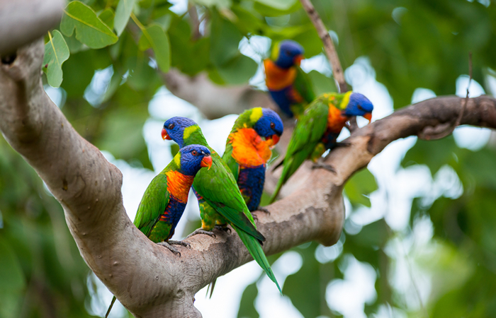 deligjhts-rainbow-lorikeets