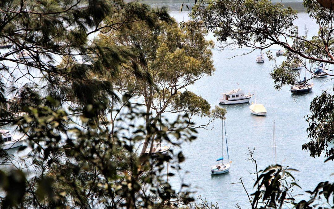 Avalon Beach – An Insider's Tips – Airbnbs